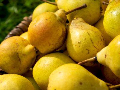 Süße Birnen aus der Fränkischen Schweiz