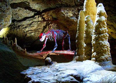 Höhlen in der Fränkischen Schweiz